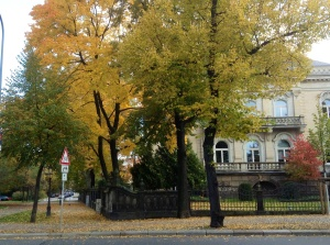 Tree-lined autumn day walk in Dresden's Neumarkt