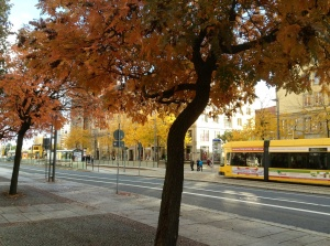 Autumn beauty in Dresden with a view of a tram