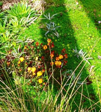 Flora in Cajas National Park, Ecuador